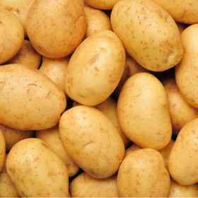 Patate Blue Star biologiche