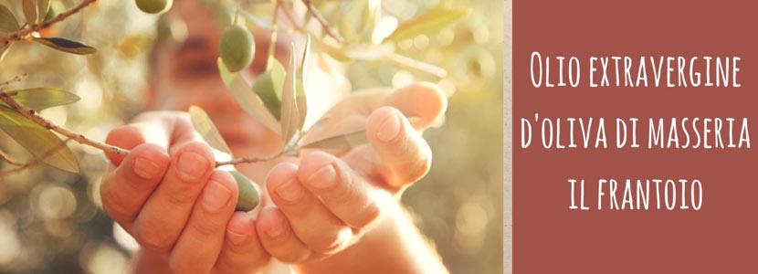 Gli ulivi secolari di Masseria Il Frantoio