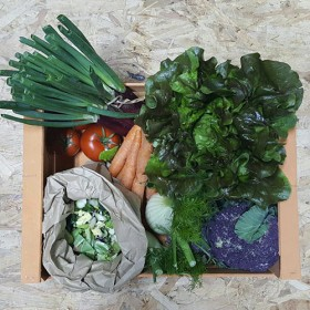 Cesto di verdura fresca BIO