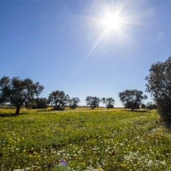 Gaia Agricolture