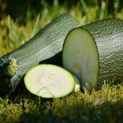Zucchine Biologiche di Terra Adriatica